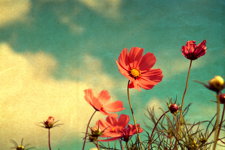 the sky with clouds: vintage cosmos flower - paper art texture, nature background
