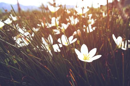 vintage wilde bloem met zonlicht, natuur achtergrond