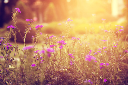vintage wild flower with sunlight, nature background Stock Photo