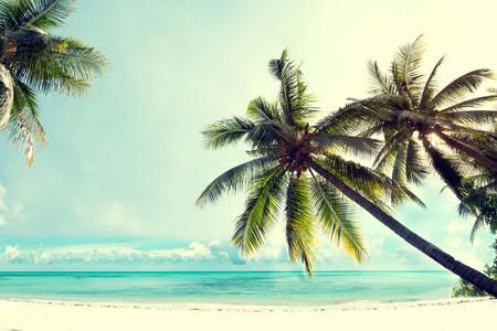 Landschap vintage natuur achtergrond van kokos palmboom op tropisch strand blauwe hemel met zonlicht van de ochtend in de zomer, retro effect filter