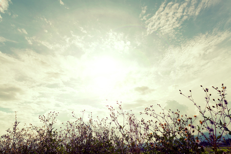 vintage wild flower with sunlight, nature background Imagens