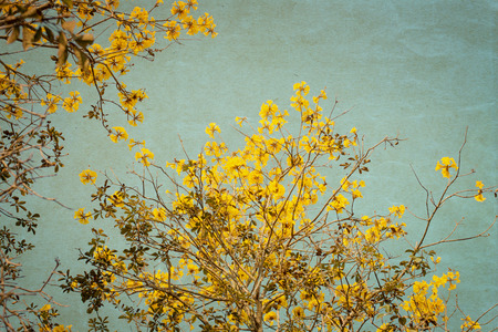 old photograph: Old photograph of yellow flower tree - vintage artr ,paper art texture Stock Photo