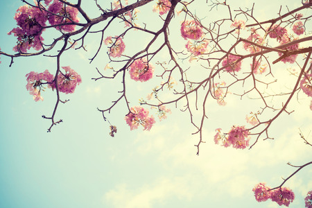 Tree flower in spring, nature background - Vintage filter effect