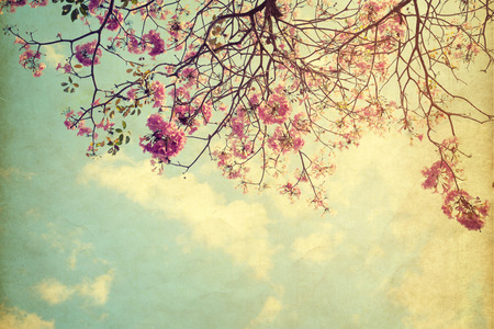 photo frames: vintage nature background of tree flower in summer ,paper art texture Stock Photo