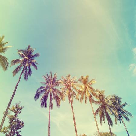 palmier: Paysage de palmiers sur la c�te tropicale, filtre � effet vintage et stylis�e