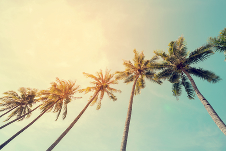 stylised: Vintage nature photo of coconut palm tree in seaside tropical coast Stock Photo