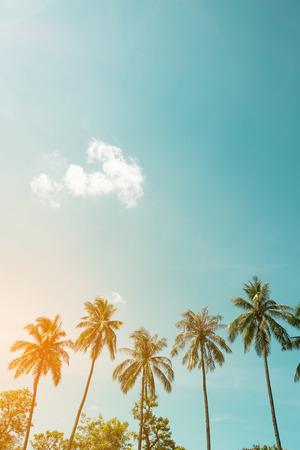 椰子棕櫚樹在海邊的熱帶海岸葡萄酒自然攝影