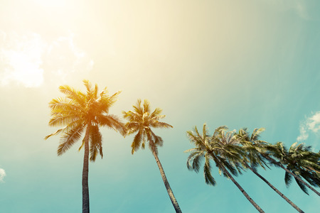 ヤシの風景木の熱帯海岸、ヴィンテージ効果フィルターと様式 写真素材