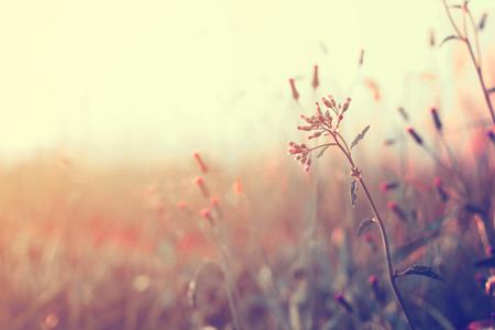 日没、レトロなフィルター効果でヴィンテージの野生の花 写真素材
