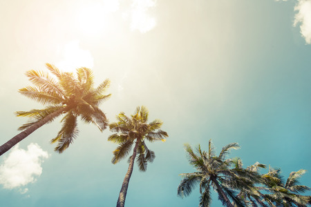 hawaii islands: Vintage coconut palm tree on beach blue sky with sunlight of morning in summer, instagram filter