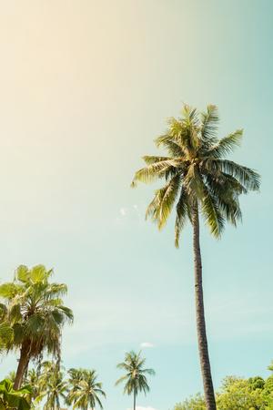 코코넛 야자수의 빈티지 자연 배경 햇빛과 열 대 해변 푸른 하늘에