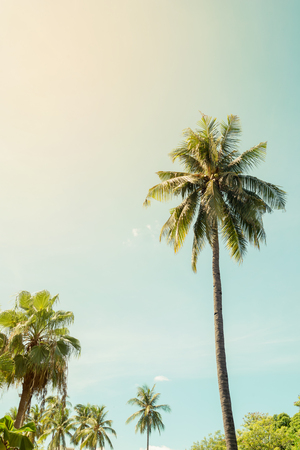Vintage nature background of coconut palm tree on tropical beach blue sky with sunlight Фото со стока