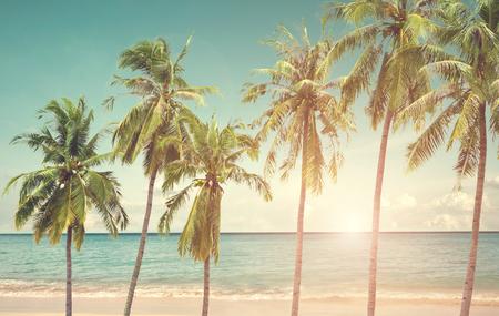 Palm van de kokosnoot op zee strand in de zomer seizoen