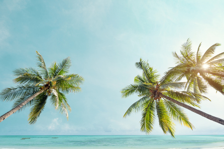 Palm tree on tropical coast with  in summer beach. vintage color tone stylized Imagens