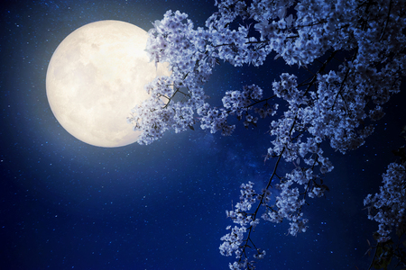 Beautiful cherry blossom (sakura flowers) with Milky Way star in night skies, full moon - Retro style artwork with vintage color tone(Elements of this moon image furnished by NASA) Stock Photo