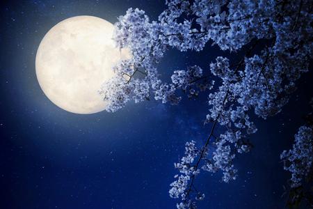 Hermosa flor de cerezo (Sakura flores) con la Vía Láctea estrellas en los cielos nocturnos, luna llena - ilustraciones del estilo retro con el tono de color de la vendimia (elementos de esta imagen proporcionada por la NASA luna) Foto de archivo