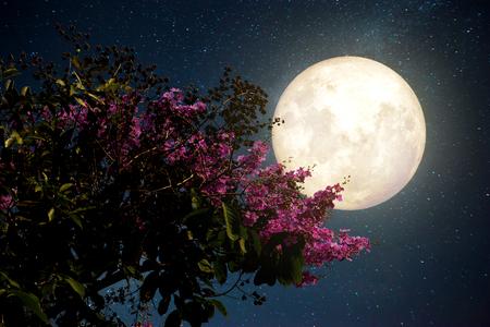 viager: Belle fleur de cerisier (fleurs de sakura) avec la Voie Lactée étoiles dans le ciel de nuit; pleine lune - Rétro illustration de style avec ton de couleur vintage (éléments de cette image de la lune fournie par la NASA)