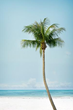 Vintage palm tree on the tropical beach (seaside) - summer season