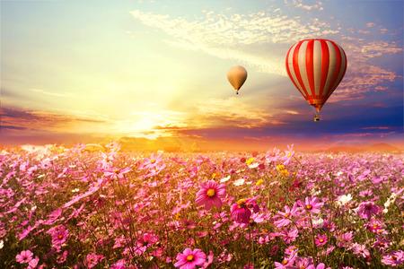 空夕日、ビンテージ、レトロなフィルター効果スタイルの美しいコスモス花フィールドと熱気球の風景