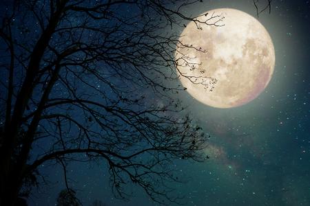 夜の空、満月と古い木 - ヴィンテージ色のトーン (NASA から提供されたこの月のイメージの要素) とレトロなスタイルのアートワークの天の川星 写真素材