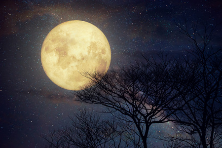noche y luna: Milky Way star in night skies, full moon and old tree - Retro style artwork with vintage color tone (Elements of this moon image furnished by NASA)
