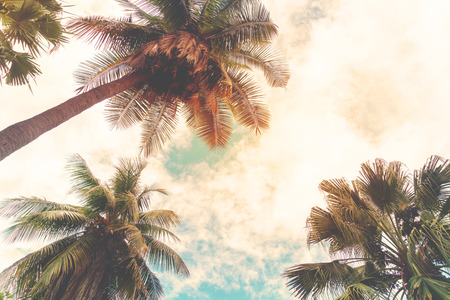 Landscape nature background of shore tropic. Coconut palm trees at seaside tropical coast, vintage effect filter and stylized Stock Photo