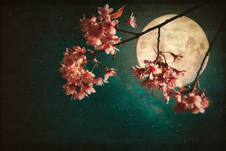 Antique and vintage style photo - Beautiful pink cherry blossom (sakura flowers) in night of skies with full moon and milky way stars. Imagens