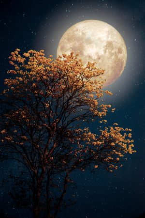 빈티지 색상 톤 레트로 판타지 스타일의 아트 워크 - 밤 하늘에서 은하수 별 보름달 아름 다운 나무 노란 꽃 꽃. 스톡 콘텐츠