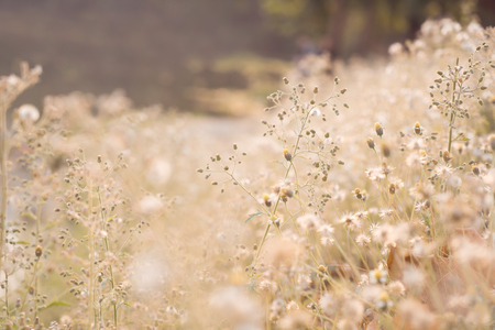 nature photo: Vintage photo of abstract nature background with wild flowers and plants dandelions in sunlight Stock Photo