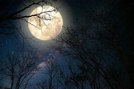 noche y luna: bella estrella de la Vía Láctea en el cielo nocturno, la luna llena y el árbol viejo - Retro ilustraciones del estilo de fantasía con el tono del color de la vendimia.