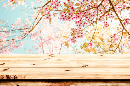flor de sakura: Top of wood table with pink cherry blossom flower (sakura) on sky background in spring season - Empty ready for your product and food display or montage. vintage color tone.
