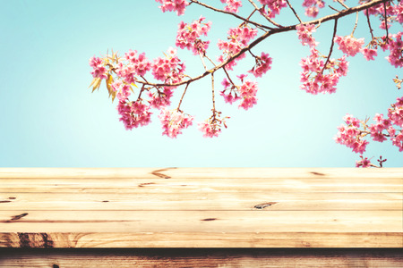 fleur de cerisier: Top of wood table with pink cherry blossom flower (sakura) on sky background in spring season - Empty ready for your product and food display or montage. vintage color tone.
