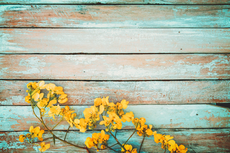 yellow flower tree: Yellow flowers on vintage wooden background, border design. vintage color tone - concept flower of spring or summer background Stock Photo