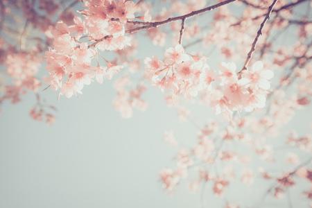 아름 다운 빈티지 사쿠라 나무 꽃 (벚꽃) 봄. 레트로 색상 톤 스타일입니다.