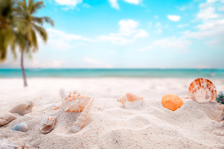 sandbar: Seaside summer beach with starfish, shells, coral on sandbar and blur sea background. Concept of summertime on beach. vintage color tone. Stock Photo