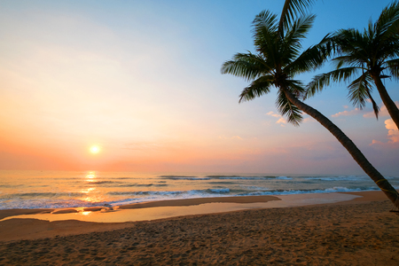 The landscape of tropical beach with palm tree in the sunrise. Beautiful nature and calm. Imagens - 75565227
