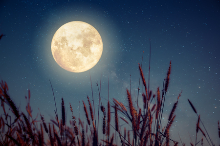 Beautiful autumn fantasy - wild flower in fall season and full moon with milky way star in night skies background. Retro style artwork with vintage color tone Фото со стока