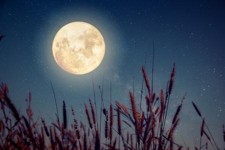 Schöne Herbst Fantasy - wilde Blume in Herbst Saison und Vollmond mit Milchstraße Stern in Nacht Himmel Hintergrund. Retro-Stil Artwork mit Vintage Farbton