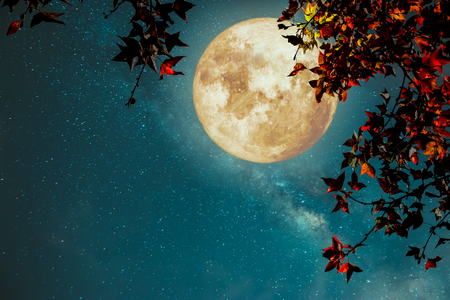 Piękna jesienna fantazja - klon w sezonie jesiennym i pełni księżyca z gwiazdą Drogi Mlecznej na tle nocnego nieba. Grafika w stylu retro z odcieniem koloru vintage