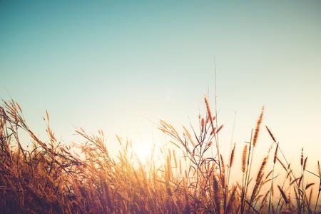 Mooie herfst seizoen achtergrond - wild gras met zonsondergang en blauwe hemel in de herfst. Stockfoto