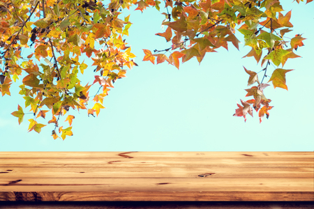 Top of wood table with beautiful autumn maple tree on sky background - Empty ready for your product display or montage. Concept of background in fall season. Stock Photo