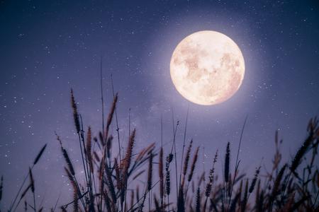 belle automne imaginaire - érable dans la saison d & # 39 ; automne et pleine lune avec milky way globe dans la nuit de fond de ciel. rétro style vintage avec vignette de couleur vintage