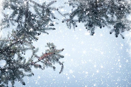 Christmas tree pine branch and snowfall on sky background. vintage color tone and rustic style.