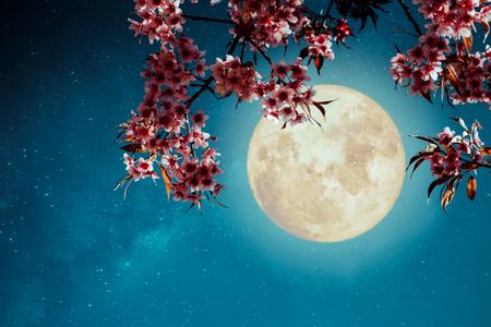Romantische nachtscène - Mooie kersenbloesem (sakura-bloemen) in nachthemel met volle maan. - Retro-stijl artwork met vintage kleurtint. Stockfoto