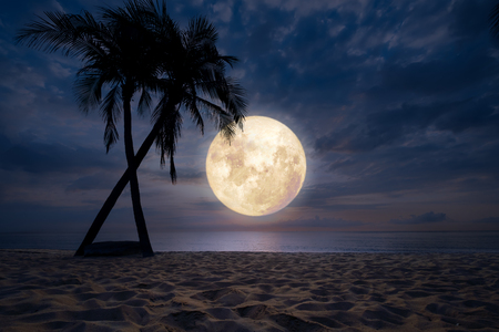 Beautiful fantasy of tropical beach with silhouette palm tree in night sky, full moon - dreamlike wonder nature.