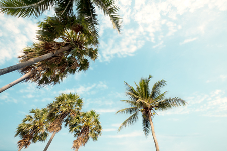Palm tree on tropical beach with blue sky and sunlight in summer, up risen angle. Stock Photo