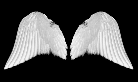 White angel wings isolated on black background Foto de archivo