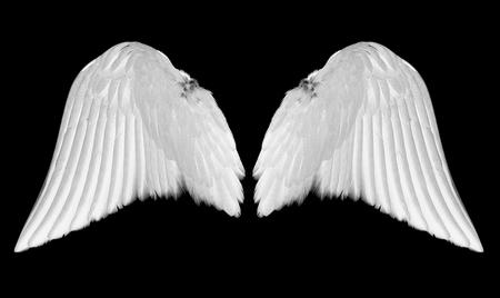 Alas de ángel blanco aisladas sobre fondo negro Foto de archivo - 101007328