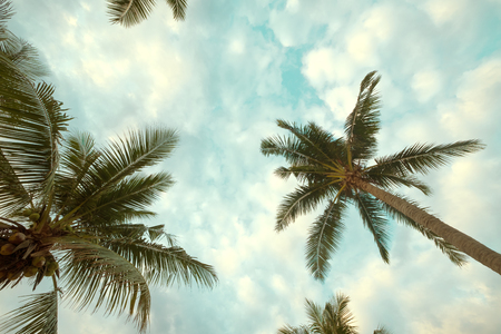 Vintage nature background - coconut palm tree on tropical beach blue sky with sunlight of morning in summer, uprisen angle. vintage Stock Photo