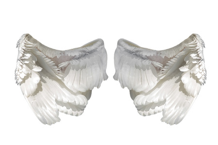 White angel wings isolated on white background